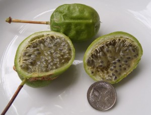 Passiflora herbertiana fruit